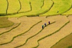 Πεδία ρυζιού Terrced - τρεις γυναίκες επισκέπτονται τα πεδία ρυζιού τους στη MU Cang Chai Στοκ Φωτογραφίες