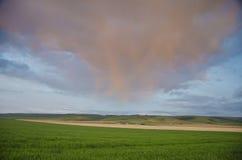 πεδία σύννεφων πέρα από το σίτ Στοκ εικόνες με δικαίωμα ελεύθερης χρήσης