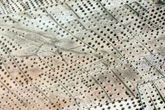 Πεδία της φυτείας ελιών Στοκ Εικόνες