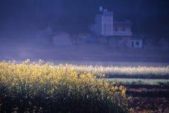 πεδία χρυσά Στοκ φωτογραφία με δικαίωμα ελεύθερης χρήσης