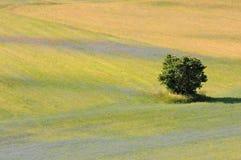 Πεδία Castelluccio Στοκ εικόνες με δικαίωμα ελεύθερης χρήσης