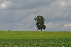 πεδίο ένα δέντρο Στοκ Φωτογραφία