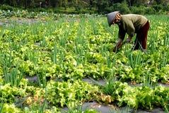 πεδίο αγροτών στοκ φωτογραφίες