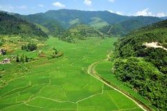 Πεδίο βουνών και ρυζιού στοκ εικόνες με δικαίωμα ελεύθερης χρήσης