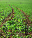 πεδίο γεωργίας στοκ εικόνα