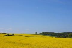 πεδίο κίτρινο στοκ φωτογραφίες με δικαίωμα ελεύθερης χρήσης