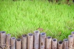 Πεδίο και μπαμπού ρυζιού Στοκ Φωτογραφία