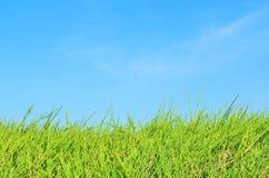 Πεδίο και μπλε ουρανός χλόης Στοκ Εικόνες