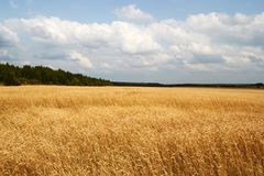Πεδίο και ουρανός Στοκ φωτογραφία με δικαίωμα ελεύθερης χρήσης