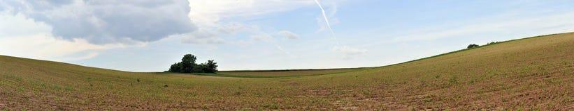 πεδίο καλαμποκιού στοκ φωτογραφία με δικαίωμα ελεύθερης χρήσης