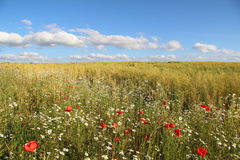 Πεδίο λουλουδιών Στοκ Φωτογραφίες