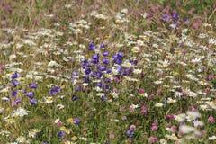 Πεδίο λουλουδιών Στοκ φωτογραφίες με δικαίωμα ελεύθερης χρήσης