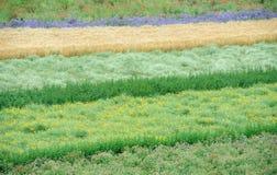 Πεδίο λουλουδιών Στοκ Φωτογραφία