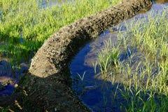 Πεδίο ορυζώνα ρυζιού Στοκ φωτογραφία με δικαίωμα ελεύθερης χρήσης