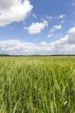 πεδίο πράσινο Στοκ φωτογραφία με δικαίωμα ελεύθερης χρήσης