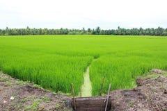 Πεδίο ρυζιού Στοκ Φωτογραφίες