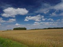 Πεδίο το καλοκαίρι στοκ εικόνα με δικαίωμα ελεύθερης χρήσης