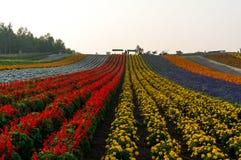 Πεδίο των λουλουδιών Στοκ εικόνα με δικαίωμα ελεύθερης χρήσης