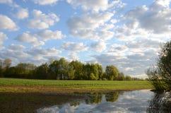 Πεδίο φυτών χειμερινών συγκομιδών του πλημμυρίζοντας ύδατος άνοιξης Στοκ Εικόνες