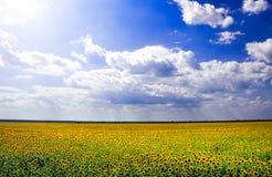 Πεδίο Beauutiful sunlower Στοκ Εικόνα