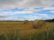 πεδίο hayrolls Στοκ Εικόνα
