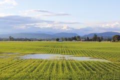 πεδίο s αγροτών που διαποτίζεται στοκ εικόνες