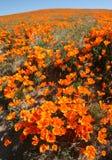 πεδίο wildflower Στοκ Εικόνα