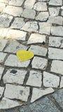 Πεζοδρόμιο και φύλλο Στοκ φωτογραφίες με δικαίωμα ελεύθερης χρήσης