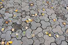 πεζοδρόμιο φύλλων φθινοπ Στοκ φωτογραφία με δικαίωμα ελεύθερης χρήσης