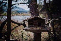 Πεζοπορία μέσω του ψηλού δάσους Στοκ εικόνες με δικαίωμα ελεύθερης χρήσης