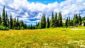 Πεζοπορία μέσω των αλπικών λιβαδιών που καλύπτονται στα wildflowers υψηλό στον αλπικό Στοκ Εικόνα