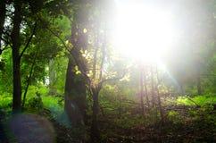 Πεζοπορία στη φύση για να δει τον κόσμο Στοκ Φωτογραφίες