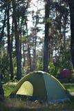 Πεζοπορία στο δάσος το καλοκαίρι, υγιής στρατοπέδευση Στοκ Φωτογραφία