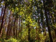 Πεζοπορία στο δάσος φύσης Στοκ εικόνα με δικαίωμα ελεύθερης χρήσης