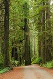 Πεζοπορία στο εθνικό πάρκο Redwood στοκ εικόνα
