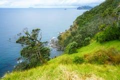 Πεζοπορία της παράκτιας διάβασης πεζών Coromandel, Νέα Ζηλανδία 66 Στοκ Εικόνες