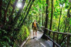 Πεζοπορώ στη Κόστα Ρίκα Στοκ Εικόνα