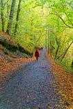 Πεζοπορώ στο δάσος φθινοπώρου Στοκ Εικόνες