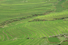 πεζούλια Βιετνάμ ρυζιού στοκ φωτογραφία με δικαίωμα ελεύθερης χρήσης