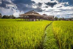 Πεζούλια ρυζιού γιαγιάδων, επαρχία γιαγιάδων, Ταϊλάνδη Στοκ εικόνες με δικαίωμα ελεύθερης χρήσης
