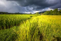 Πεζούλια ρυζιού γιαγιάδων, επαρχία γιαγιάδων, Ταϊλάνδη Στοκ φωτογραφία με δικαίωμα ελεύθερης χρήσης