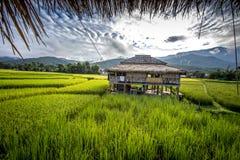 Πεζούλια ρυζιού γιαγιάδων, επαρχία γιαγιάδων, Ταϊλάνδη Στοκ Φωτογραφία