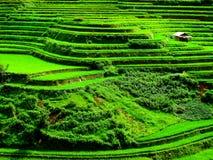 Πεζούλια ρυζιού στη MU Cang Chai στοκ εικόνες