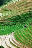πεζούλια ρυζιού Στοκ Φωτογραφία