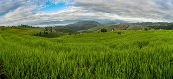 Πεζούλια ρυζιού PA Bong Piang, Chiang Mai, Ταϊλάνδη στοκ φωτογραφίες με δικαίωμα ελεύθερης χρήσης
