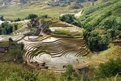 Πεζούλια ρυζιού, Sa PA, Βιετνάμ Στοκ Φωτογραφίες