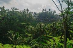 Πεζούλια ρυζιού Tegalalang σε Ubud, νησί του Μπαλί κατά τη διάρκεια της νεφελώδους ημέρας στοκ εικόνα με δικαίωμα ελεύθερης χρήσης