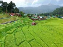 Πεζούλι ρυζιού στην εθνική επαρχία Chiang Mai περιοχής λουριών Chom πάρκων Doi Inthanon, Ταϊλάνδη κατά την άποψη ματιών πουλιών Στοκ Εικόνες