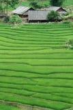 πεζούλι ρυζιού στοκ εικόνες
