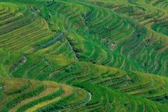 πεζούλι ρυζιού στοκ εικόνα